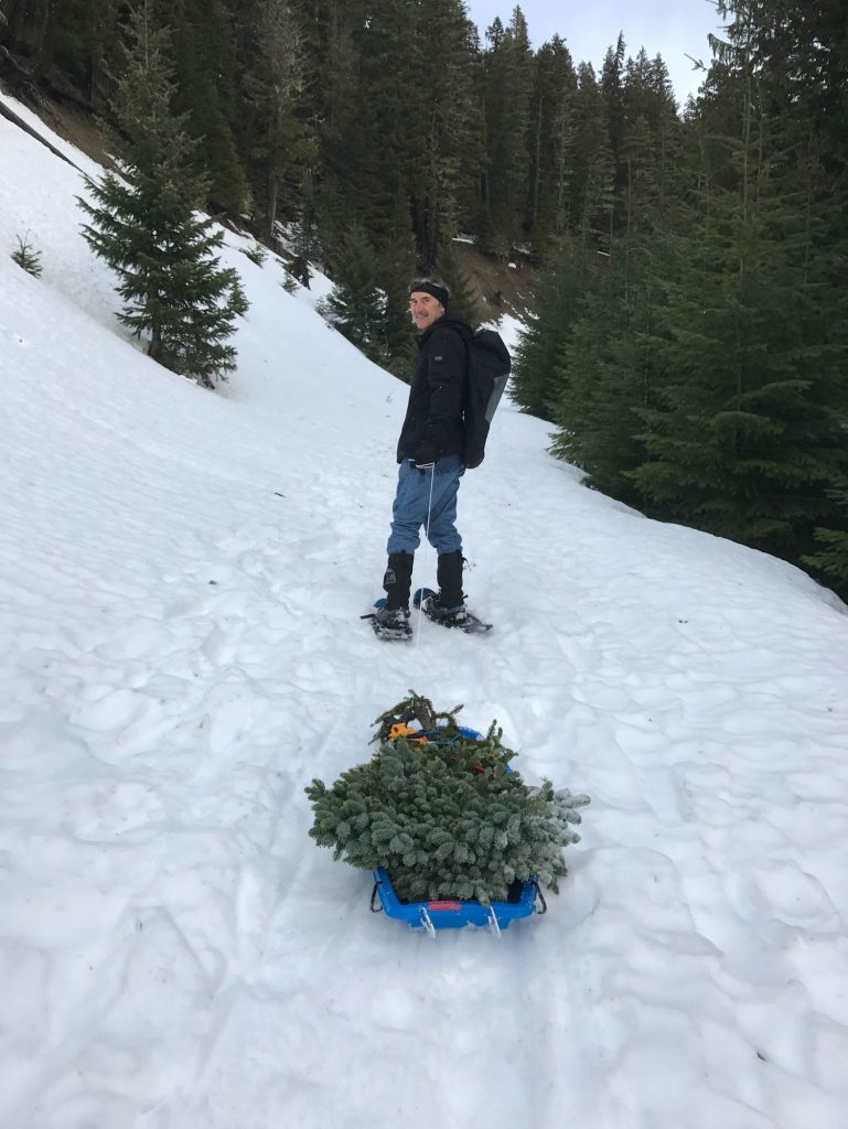 Mike Davison harvesting Abies procera 'Rhapsody in Blue' broom at White Pass WA in the Cascade mountain range