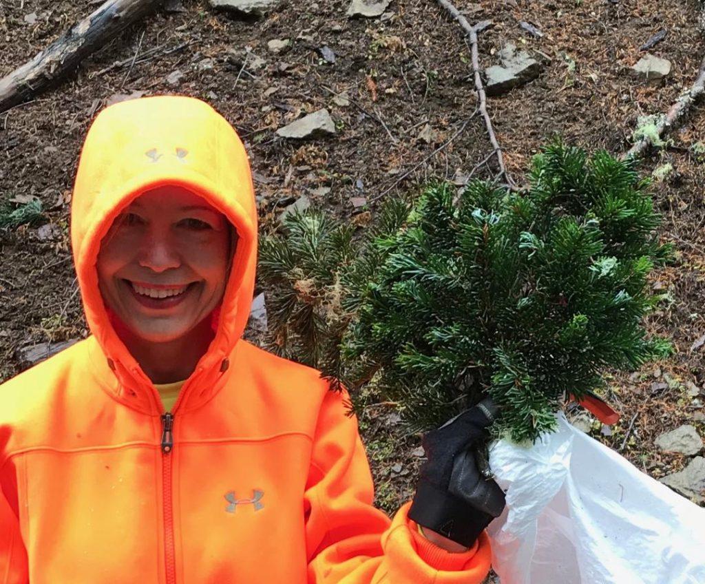 Cheryl with the newly harvested Abies amabilis 'Sweet 16' new cultivar!