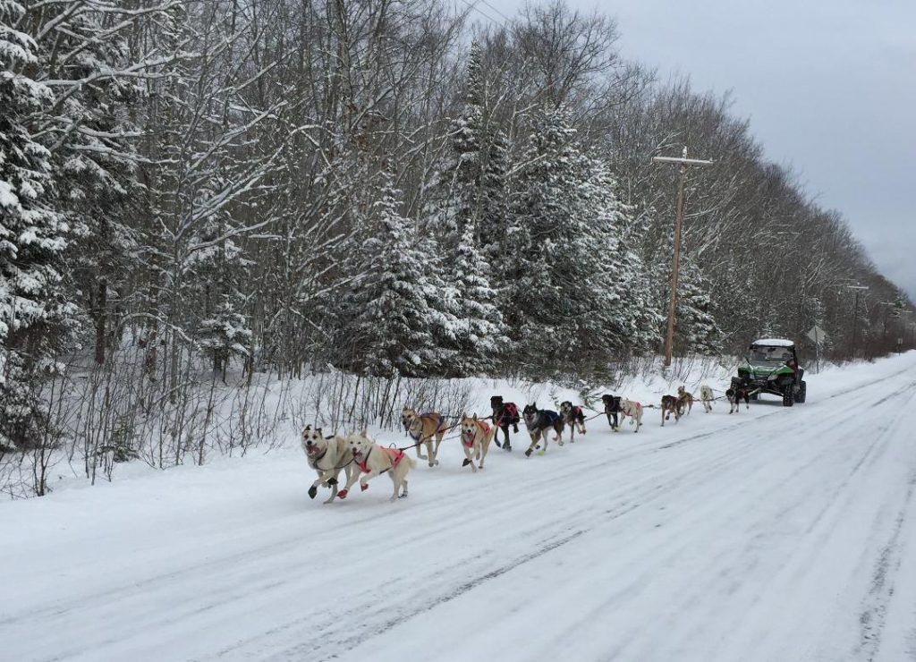 A team of huskies pulling an ATV