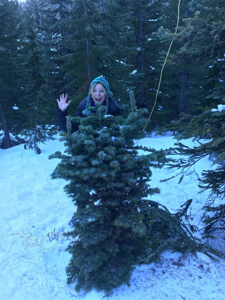 Cheryl excited to harvest the Abies amabilis 'White Pass broom in January!