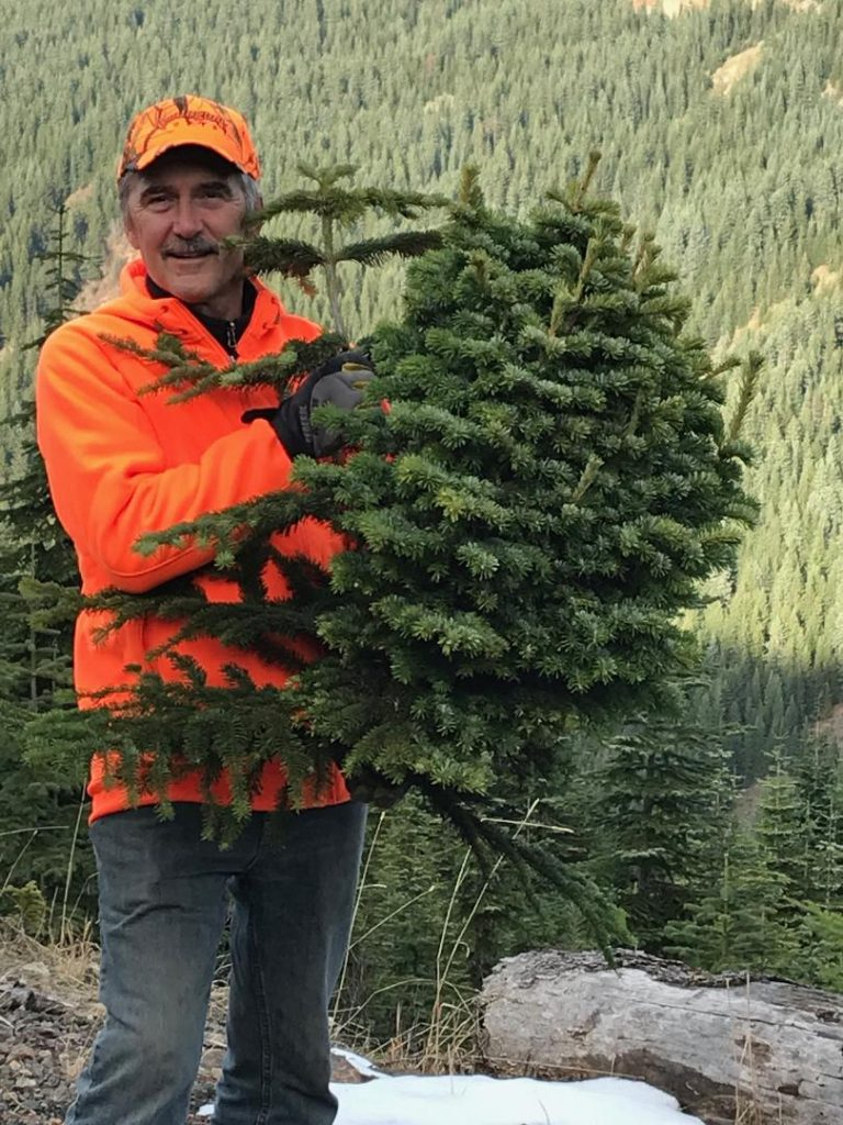 Abies amabilis 'Shooting Star' Pacific fir broom measures 30 inches tall, 18 inches wide. And very heavy!