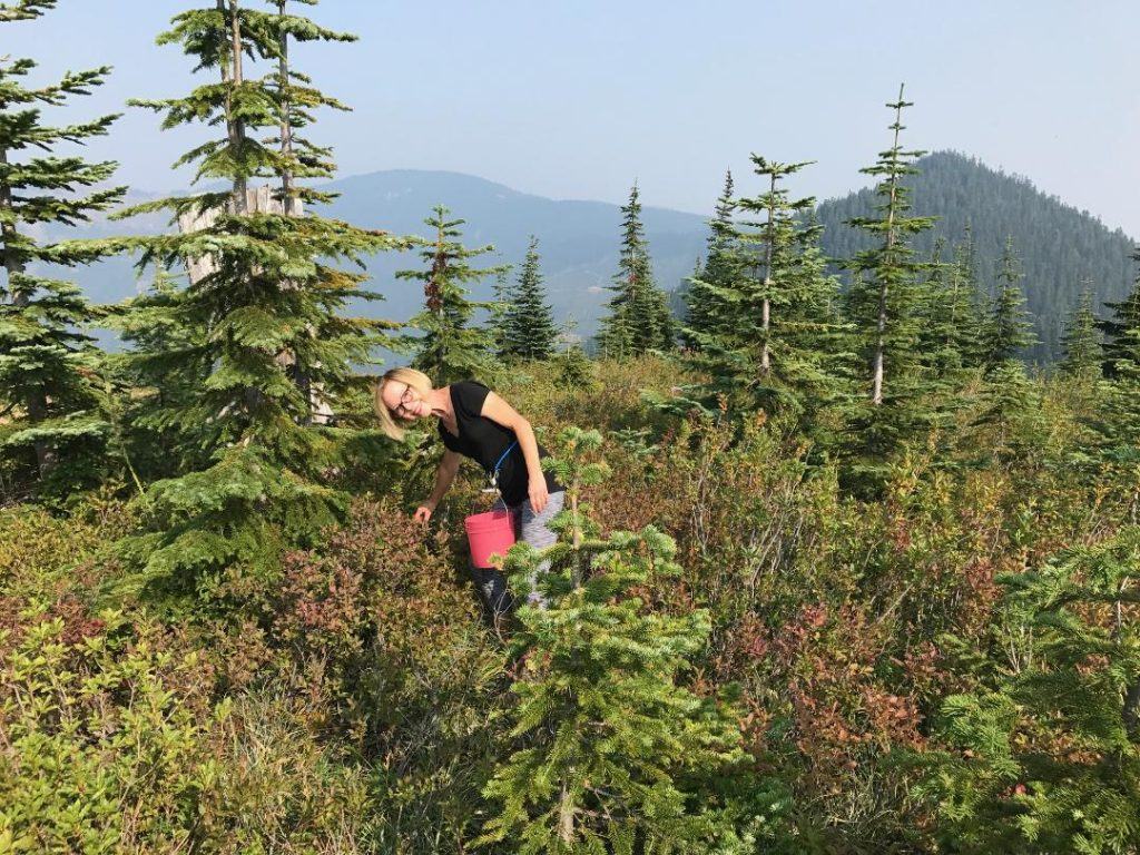 Cheryl picking huckleberries in the Stampede Pass area.