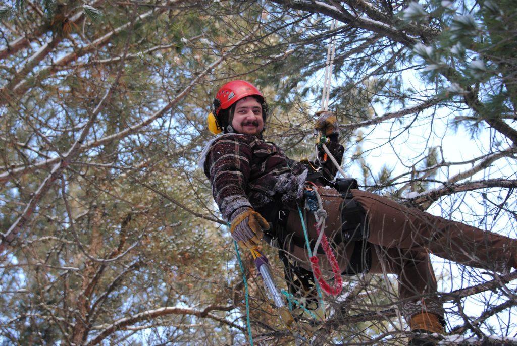 Brandon enjoying climbing white pine tree to retrieve broom scions