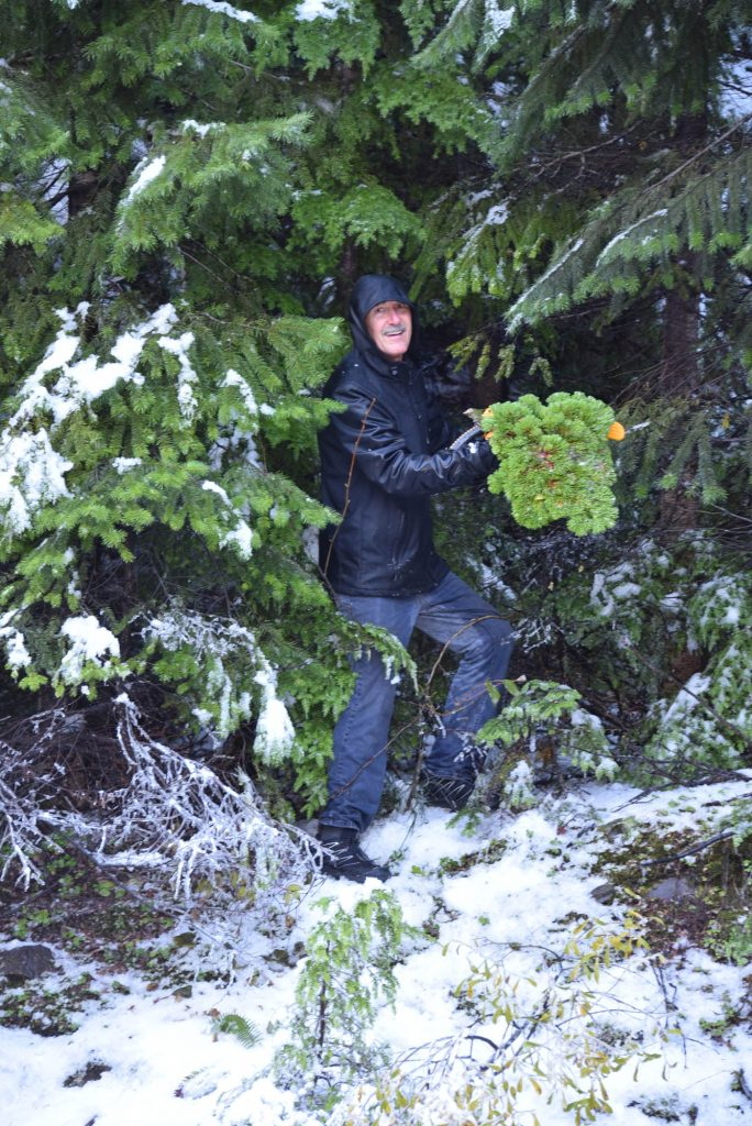 Mike  with his freshly harvested new Pacific fir broom, 'Galaxy'!