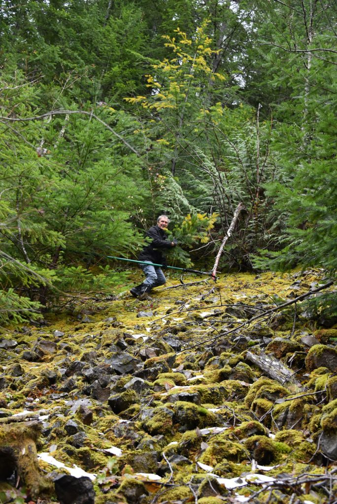 mossy rock incline to get up to Doug fir 'Christmas Candles'