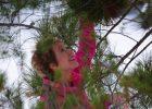 Pinus-resinosa-B1-Ornament-1